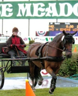 Tracy Dopko driving Edens Winston at Spruce Meadows